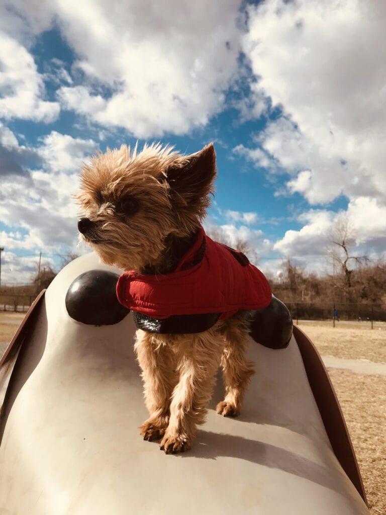 small dog with big attitude